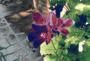 Sissinghurst Geranium for web