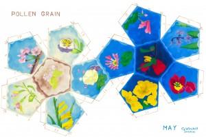 K15-05-Pollen-grain
